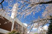 春の県立中央図書館